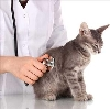 Ветеринарные клиники в Косе